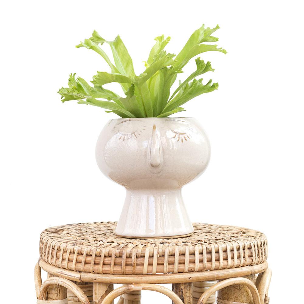 Mimi The Friendly Pot