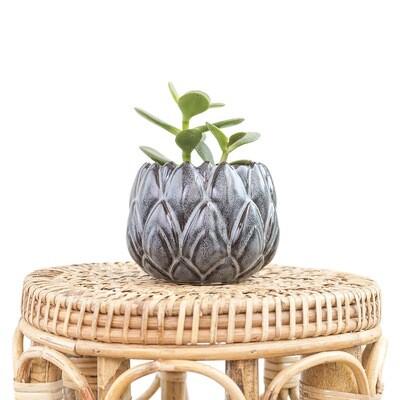 Lotus Pot