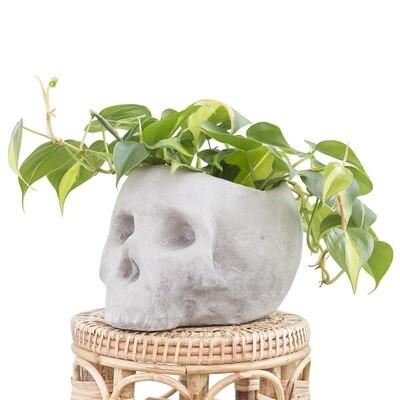 Skully Pot