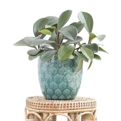 Aruba Pot