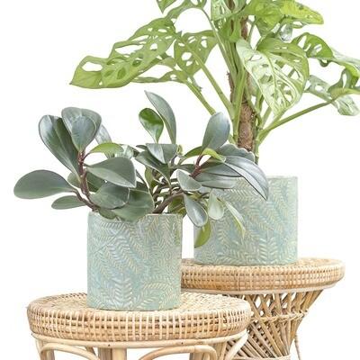 Eucalyptus Pot