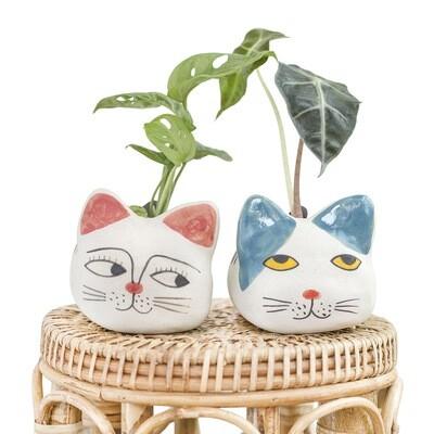 Lucky Cat Pot