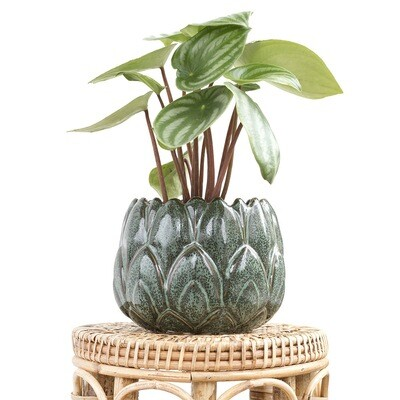 Juniper Lotus Pot