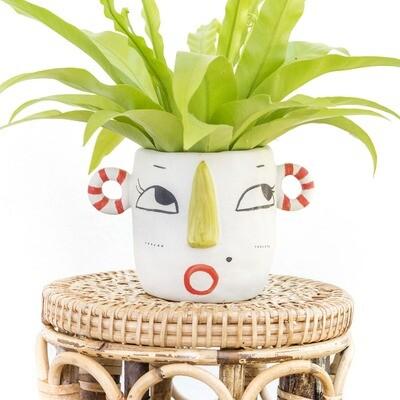 Candycane The Friendly Pot