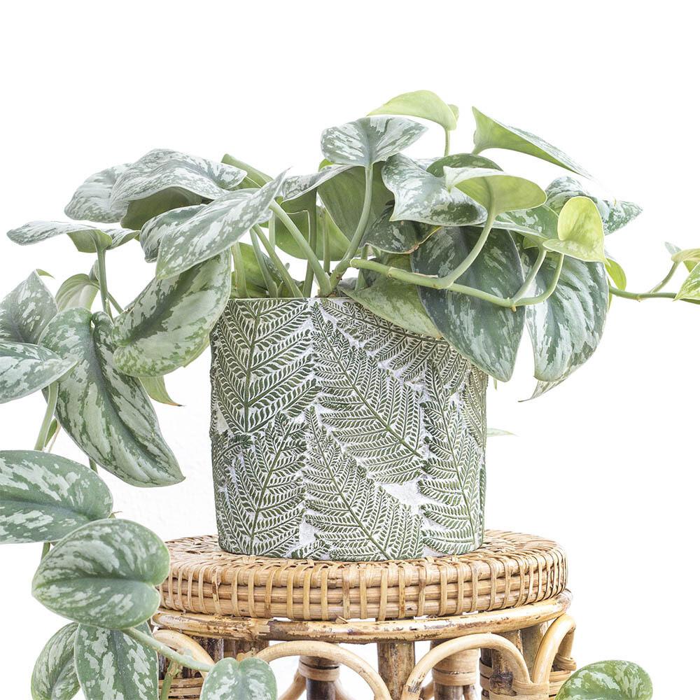 Fern Tropical Pot