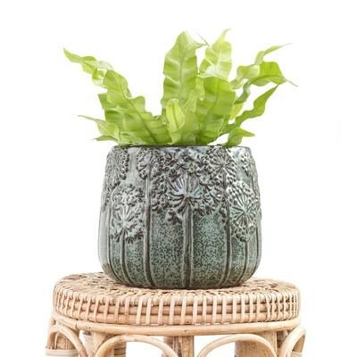 Pine Dandelion Pot