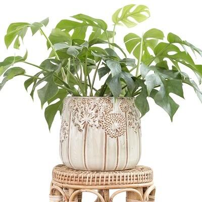 Dandelion Pot