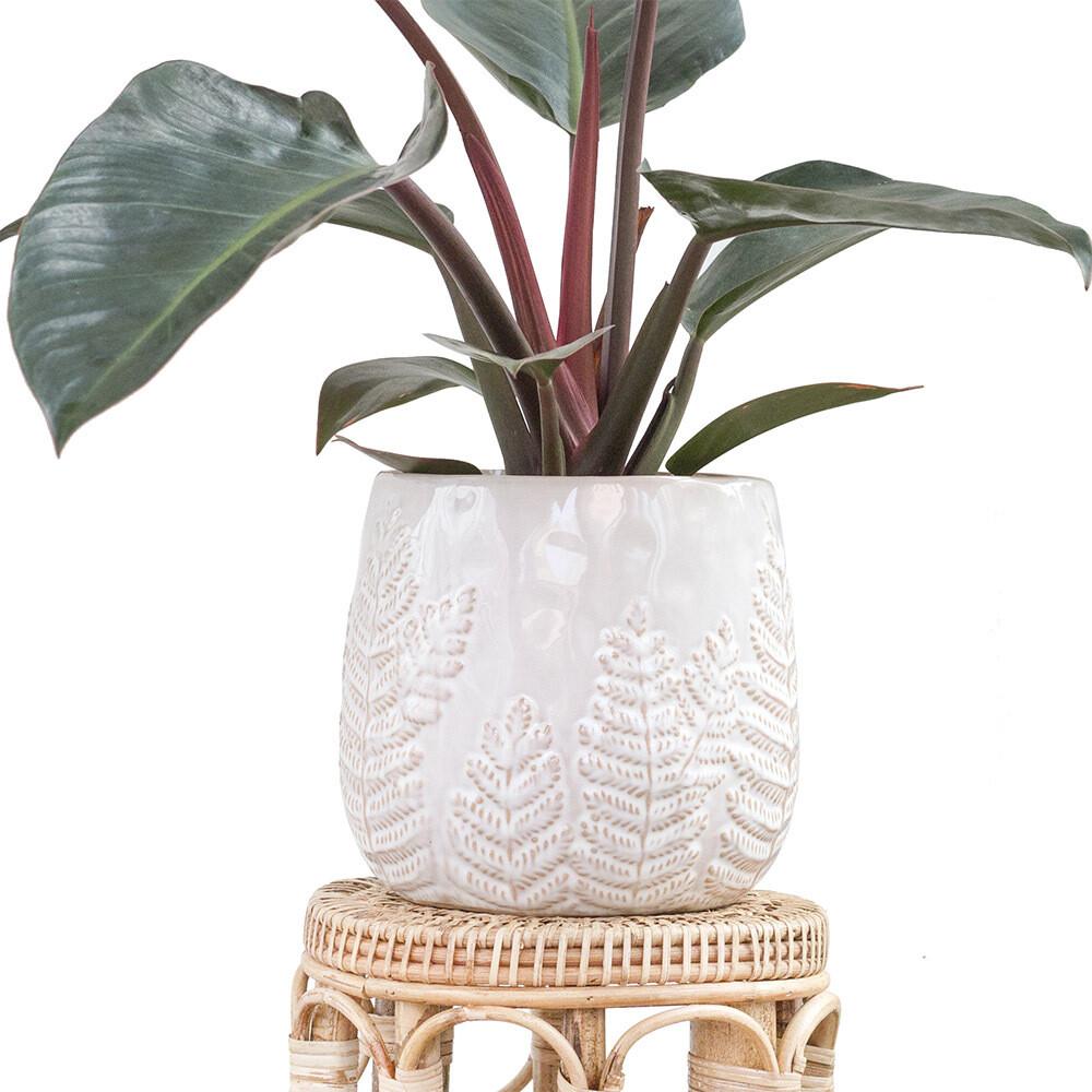 Pearl Fern Pot