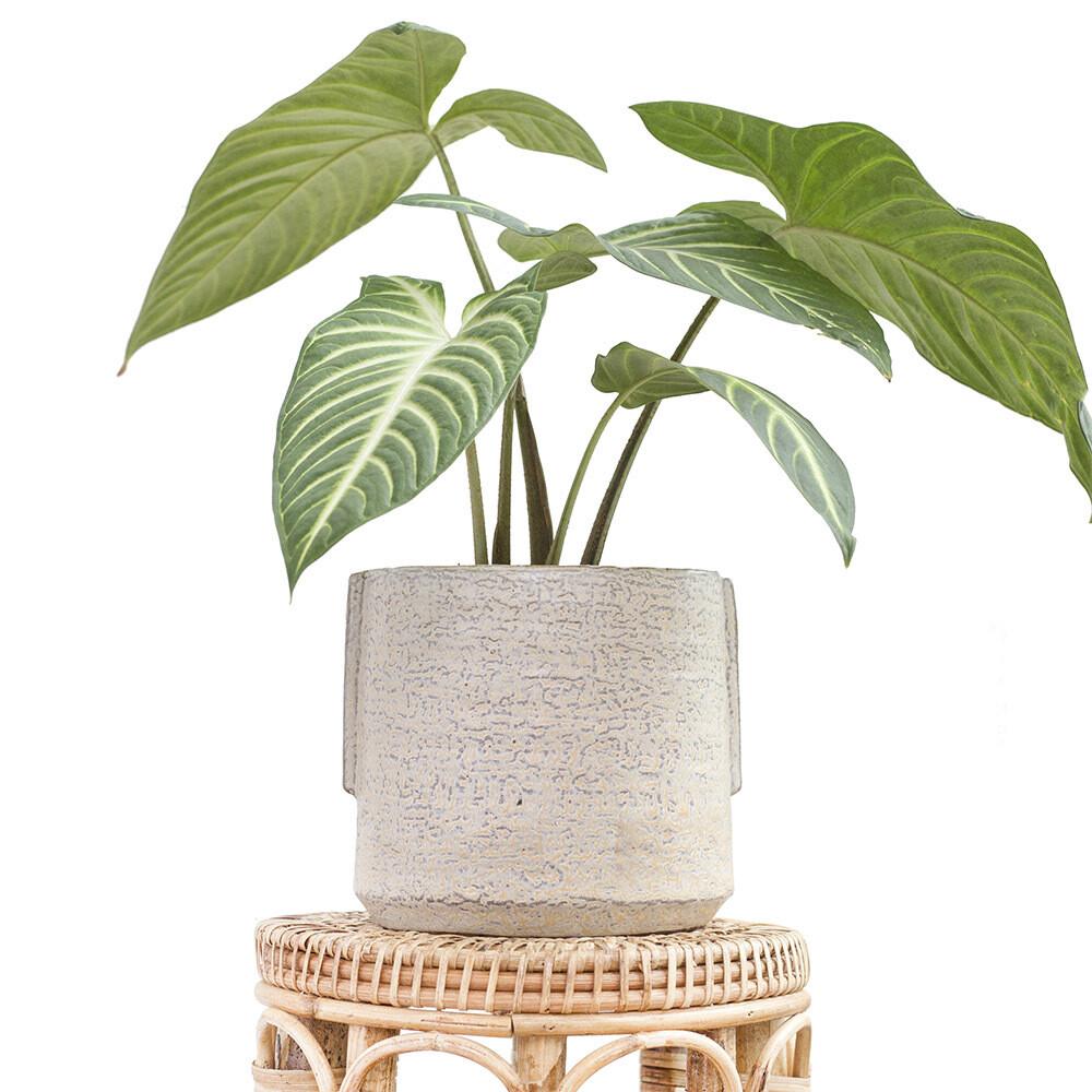 Magnolia Pot