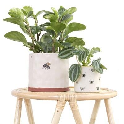 Honeysuckle Pot