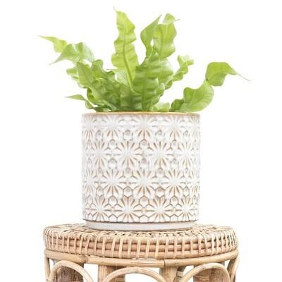 Chantilly Pot