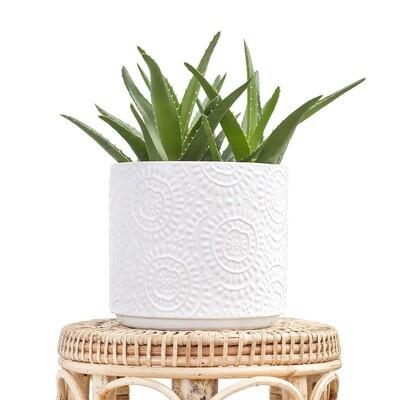 Cotton Pot