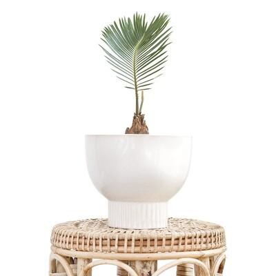 Alabaster Pot