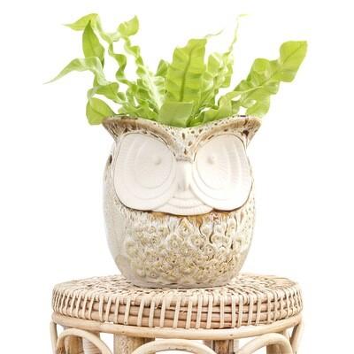 Elliot The Owl Pot
