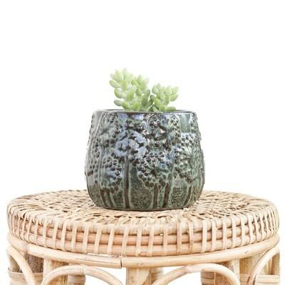 Forrest Dandelion Pot