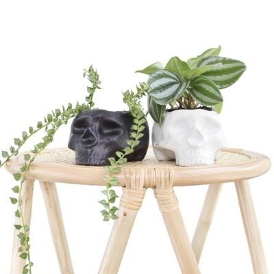 Skull & Bones Pot