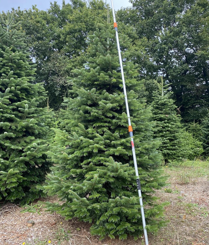 1 stk. 3 meter Juletræ - Ædelgran