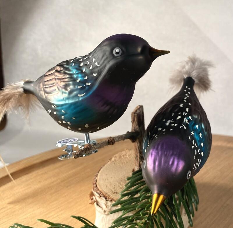 Stær - Havens Fugle