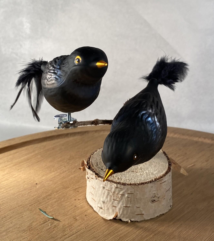 Solsort - Havens Fugle