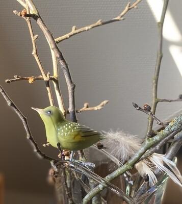 Grøn irisk - Havens fugle