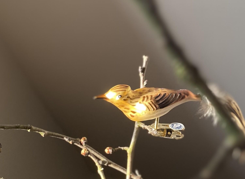 Lærke - Havens Fugle