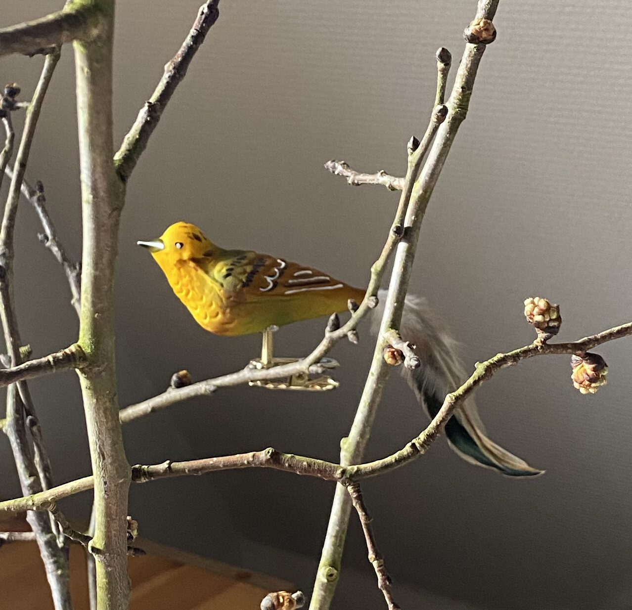 Guldspurv - Havens Fugle