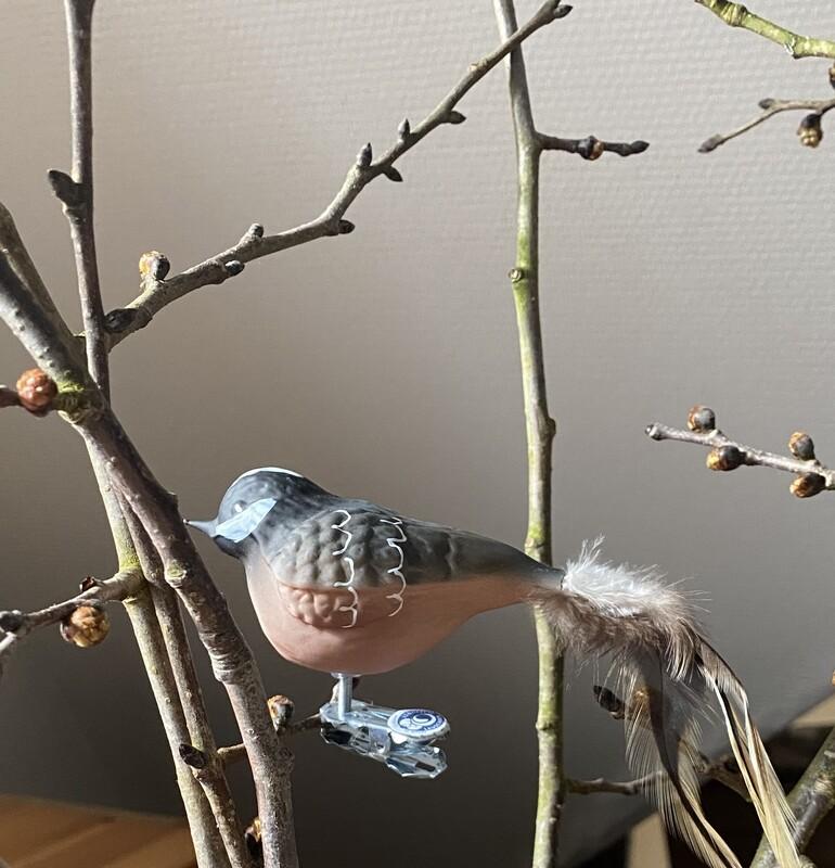 Skovspurv - Havens Fugle