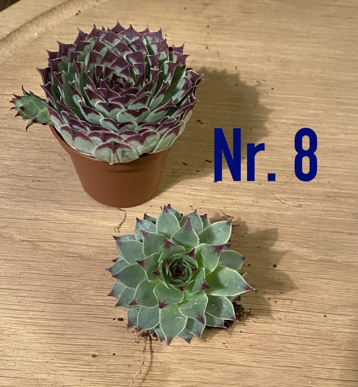 Nr. 8. Husløg