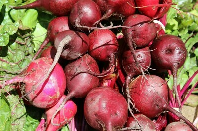 Red Beets (bunch)