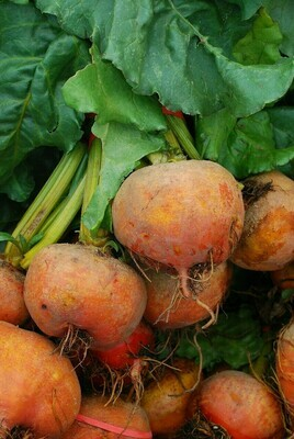 Yellow Beets (bunch)