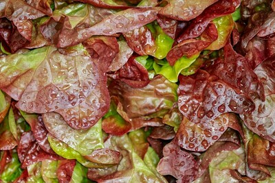 Red Leaf Lettuce (head)