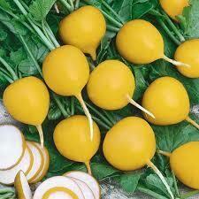 Golden Radish (bunch)