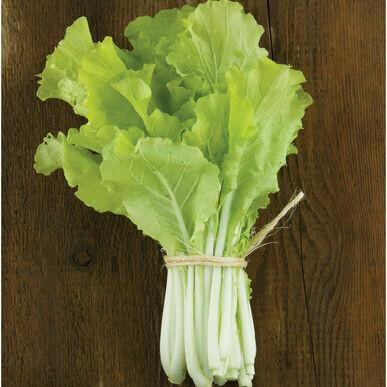 Baby Tokyo Bekana Chinese Cabbage (bag)