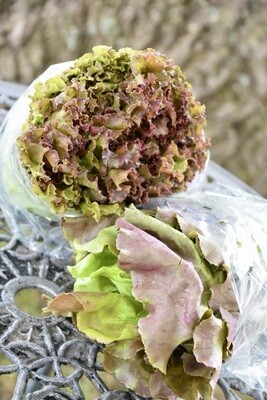 Lettuce | Tangerini's Own