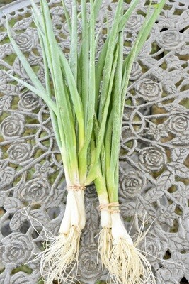 Scallions Bunch | Tangerini's Own