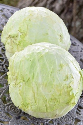 Cabbage | One | Tangerini's Own