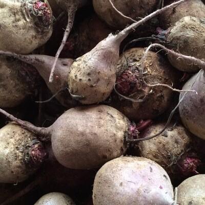 Loose Beets | Pound | Tangerini's Own