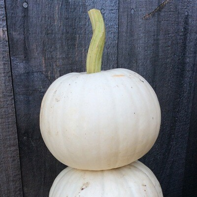Small White Pumpkin   About 5 lbs
