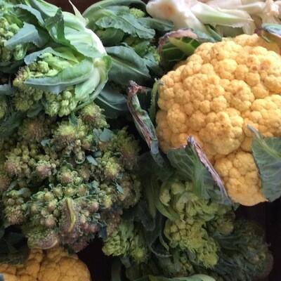Cauliflower | Pound | Tangerini's Own