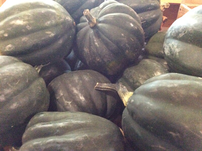 Acorn Squash | About 4 lbs | Tangerini's Own