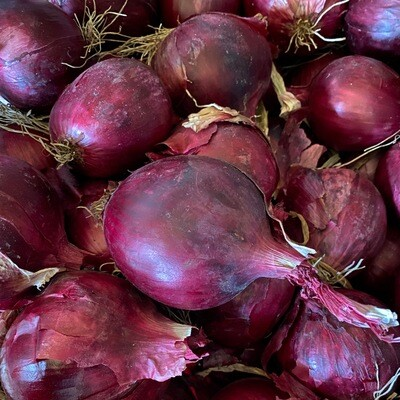 Red Onions | Pound | Tangerin's Own
