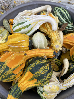 Gourds | Each | Colors Vary