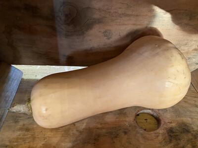 Butternut Squash  | Tangerini's Own | approx 3lbs