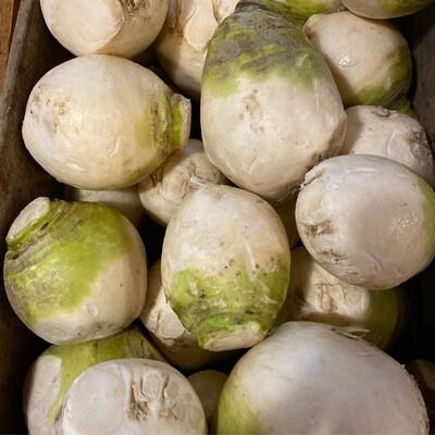 White Turnips | Pound | Tangerini's Own