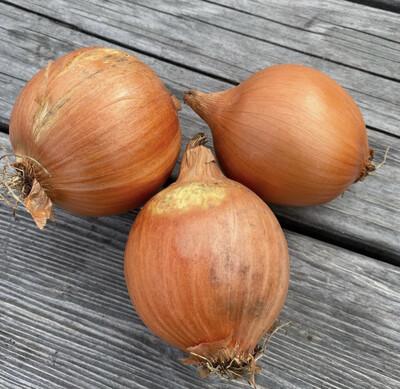 Yellow Onions | Pound | Tangerini's Own
