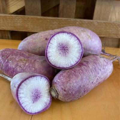 Purple Daikon Radish | Pound | Tangerini's Own