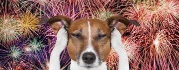 CBD DOG Treat SALE