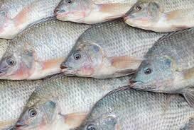 MUHAZI BIG FISH