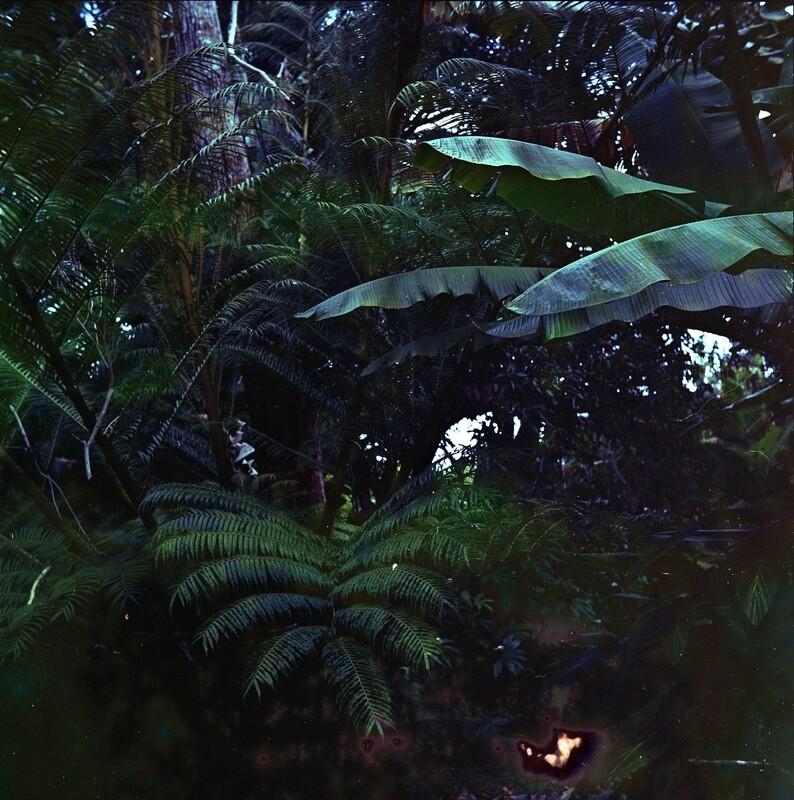 jungle wife