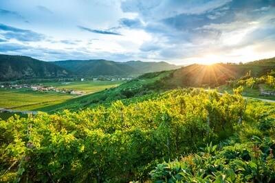 Sonnenuntergang in der Wachau in den Weingärten am Loibenberg